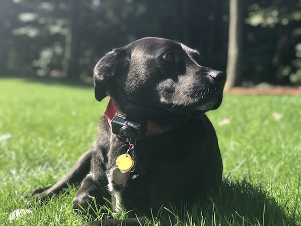 What Does A Power Failure Mean For My Electric Dog Fence